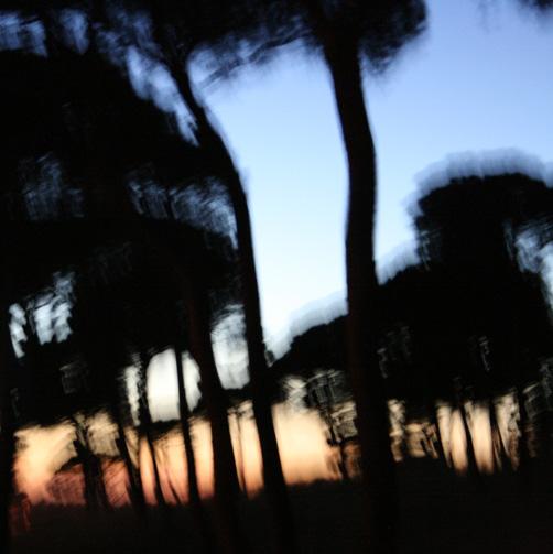 3 pinos al anochecer 2009
