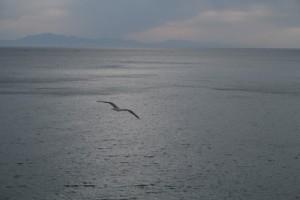 1-gaviotas-gibraltarenas