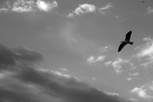 2-gaviotas-gibraltarenas