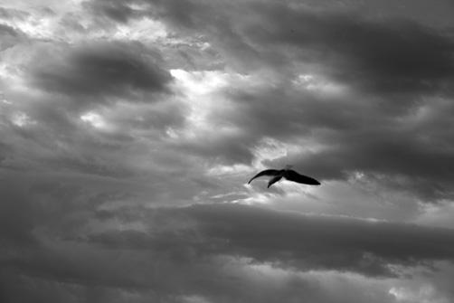 3-gaviotas-gibraltarenas