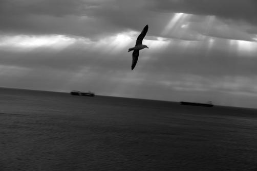4-gaviotas-gibraltarenas