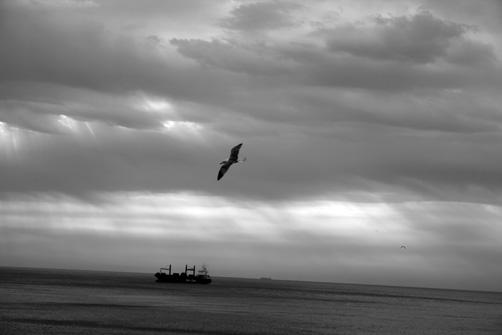 5-gaviotas-gibraltarenas