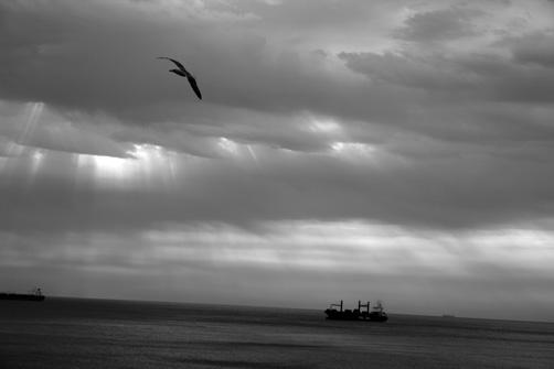 6-gaviotas-gibraltarenas