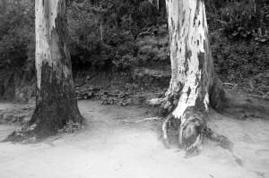 oromanabyn 2012 LGV 4