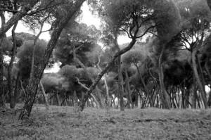 oromanabyn 2012 LGV 5