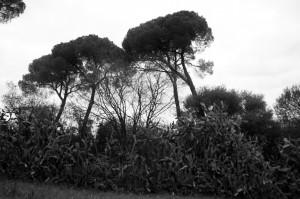 oromanabyn 2012 LGV 7