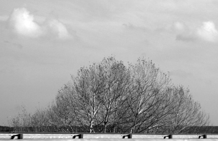 árbolesportugueseshaciaespaña.ODP2015 3