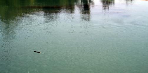 Río Tajo por la Alcarria 2008
