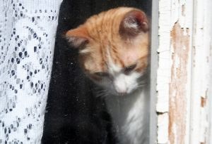 gatodelbarriosagradocorazón Lisboa 2017 3